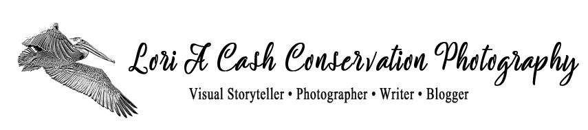 Lori A Cash Conservation Photography